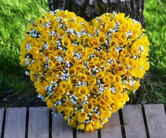 Daffodils For Sympathy