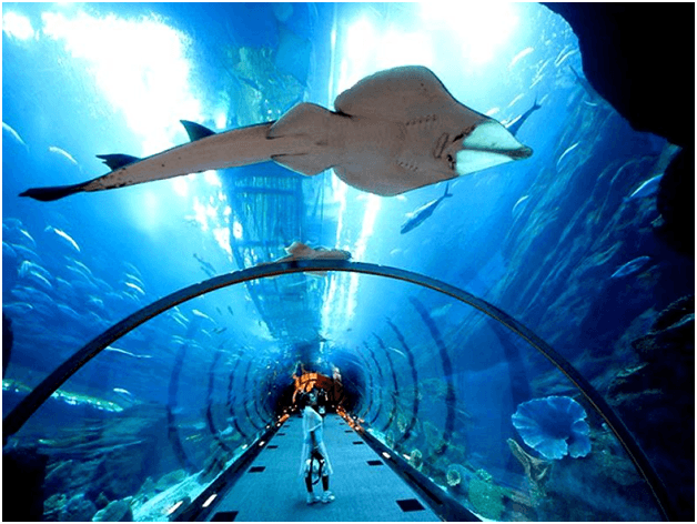 Be Amazed to See Underwater World Pattaya Bangkok Pattaya Tour Package