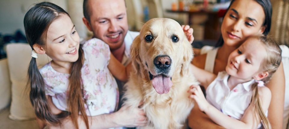 How Dogs Can Improve Health