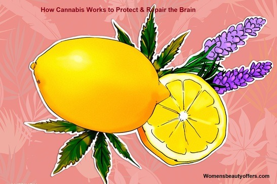 How Cannabis Works to Protect & Repair the Brain